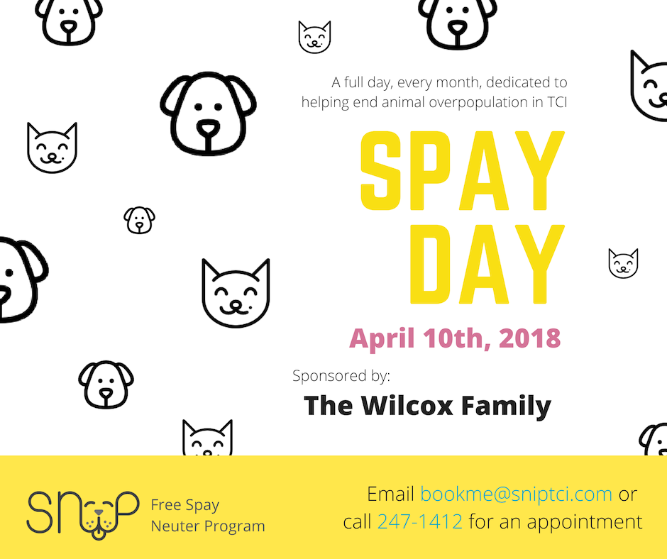 SNiP SNiP Spay Day Sponsored by The Wilcox Family