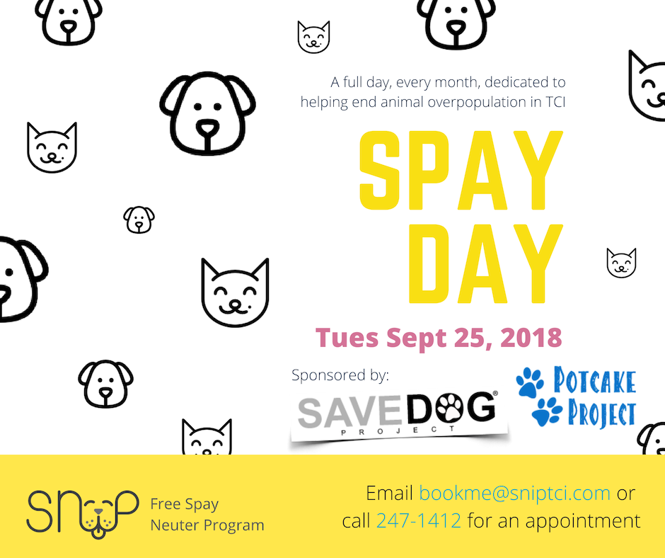 SNiP Clinic sponsored by Savedog Project and Potcake Project