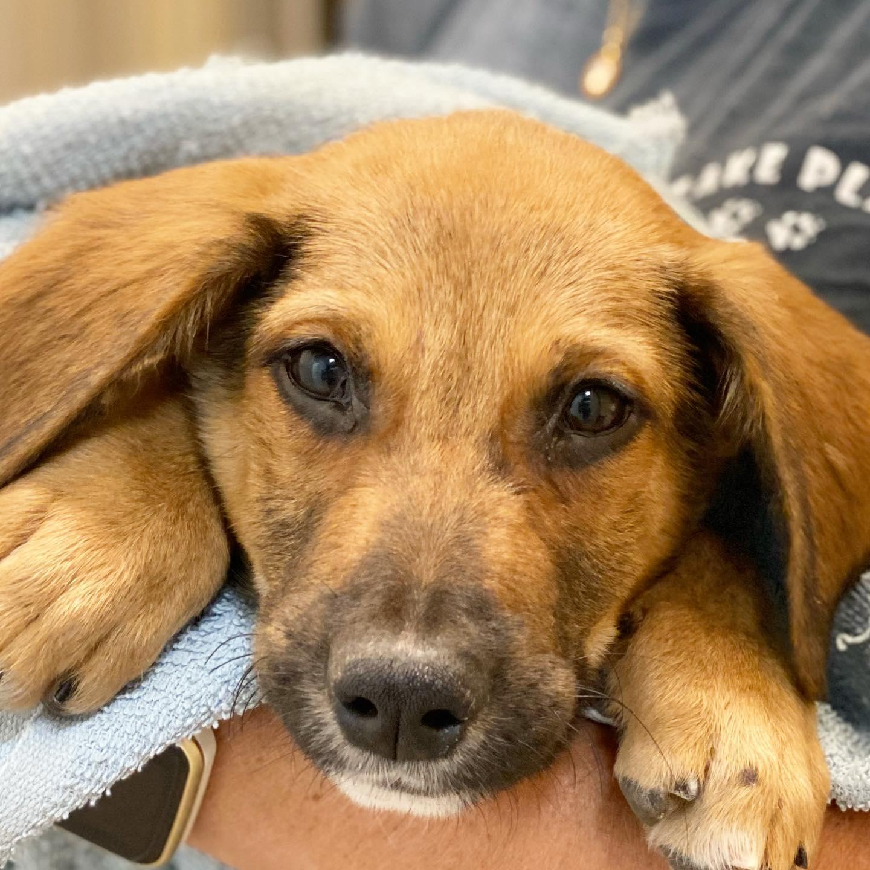 SNiP TCI Puppy Client